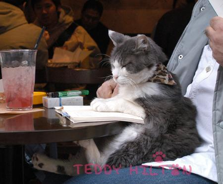 cat-cafe__oPt